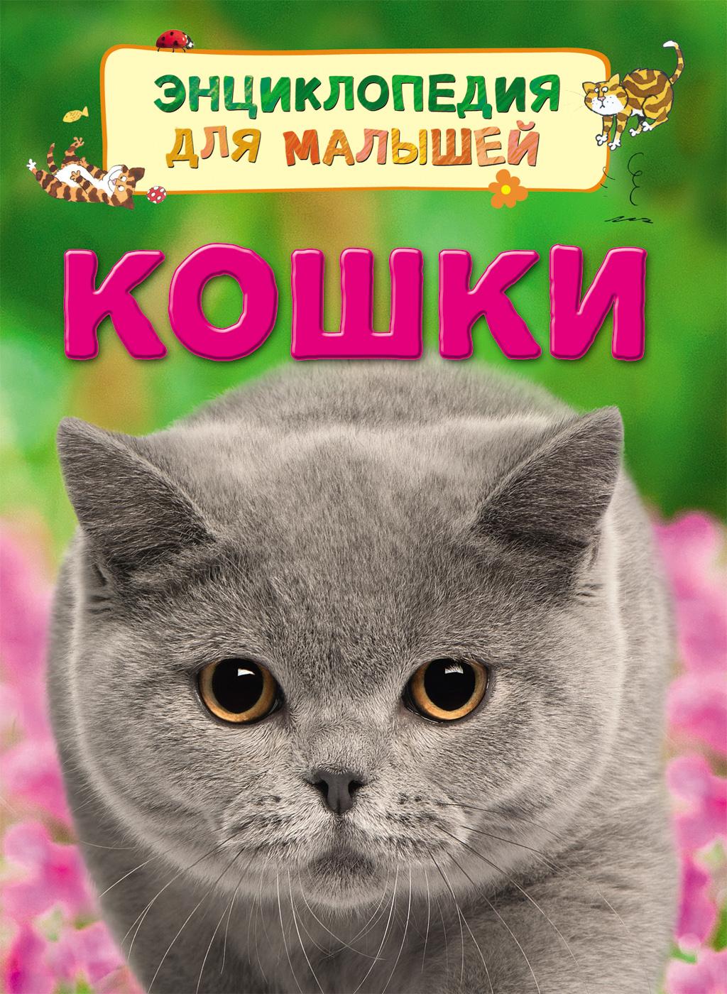 Кошки для кошки
