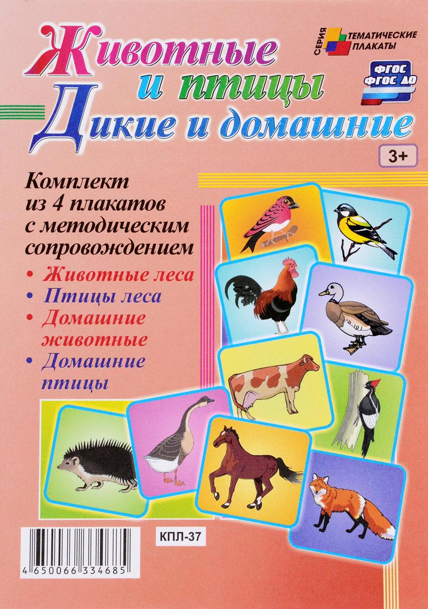 Дикие и домашние животные и птицы (комплект из 4 плакатов с методическим сопровождением) журнал животные леса 43