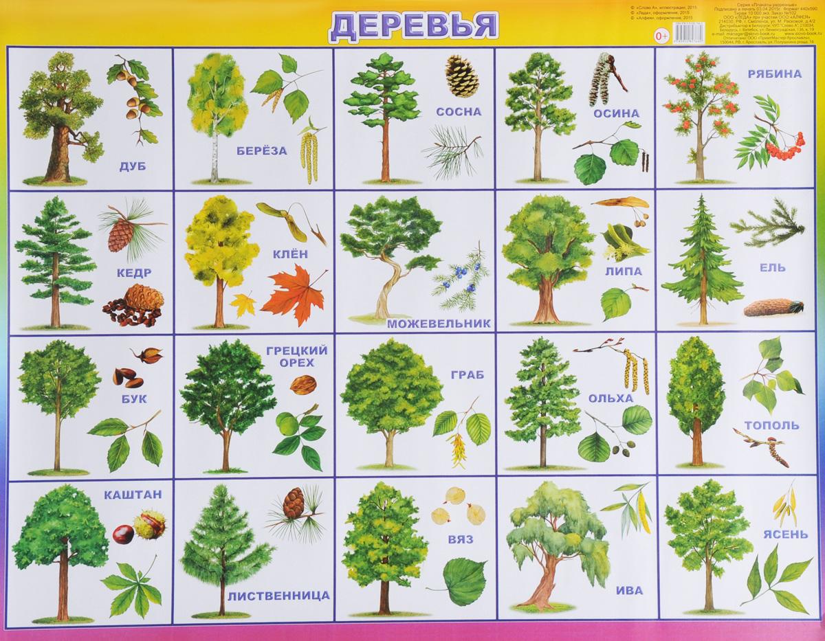 Алфея Обучающий плакат Деревья камилла де ла бедуайер деревья