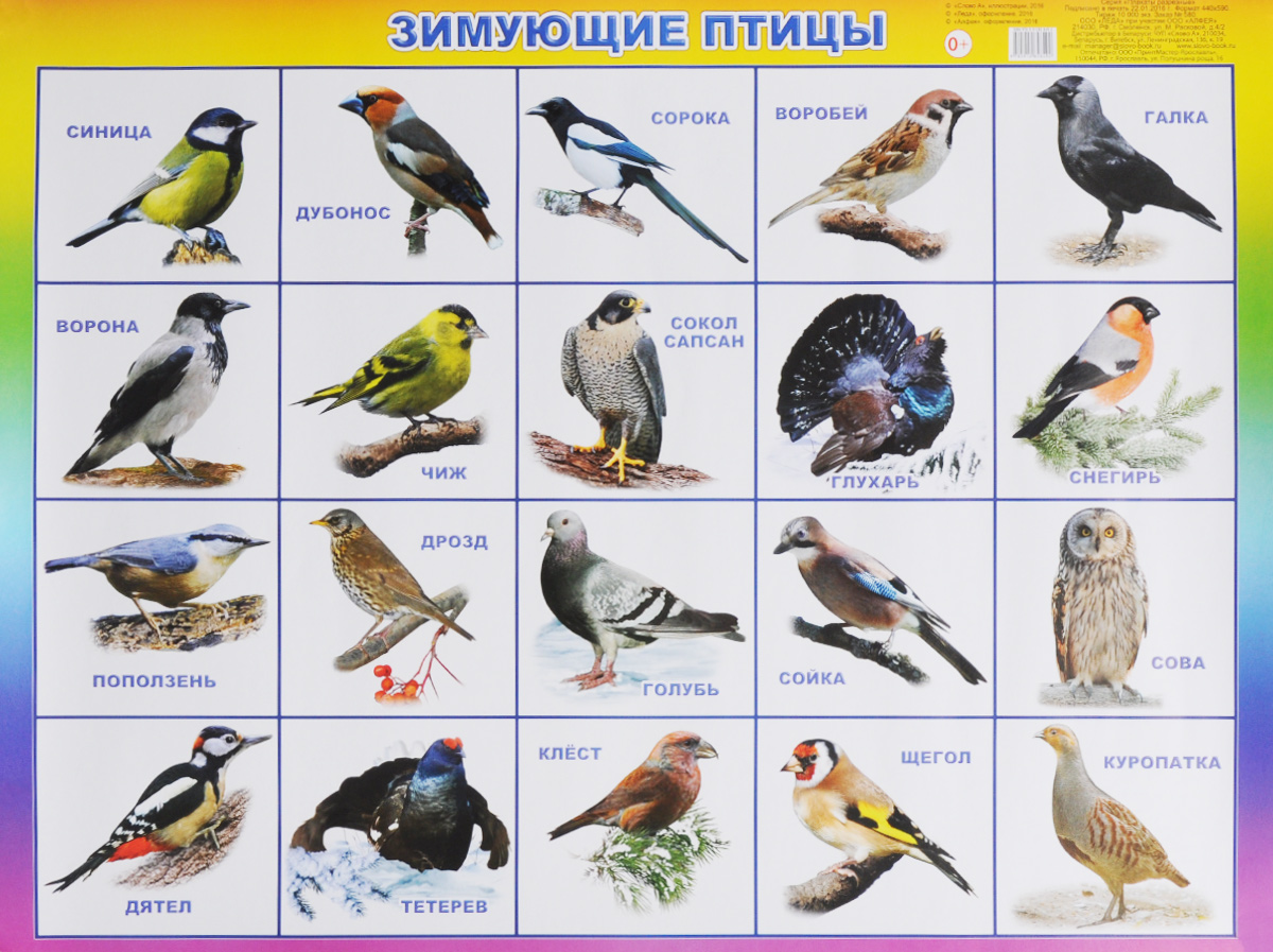 Алфея Обучающий плакат Зимующие птицы алфея обучающий плакат малый таблица умножения