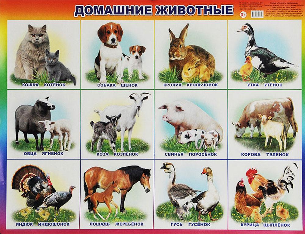 Алфея Обучающий плакат Домашние животные обучающие плакаты алфея плакат расписание уроков