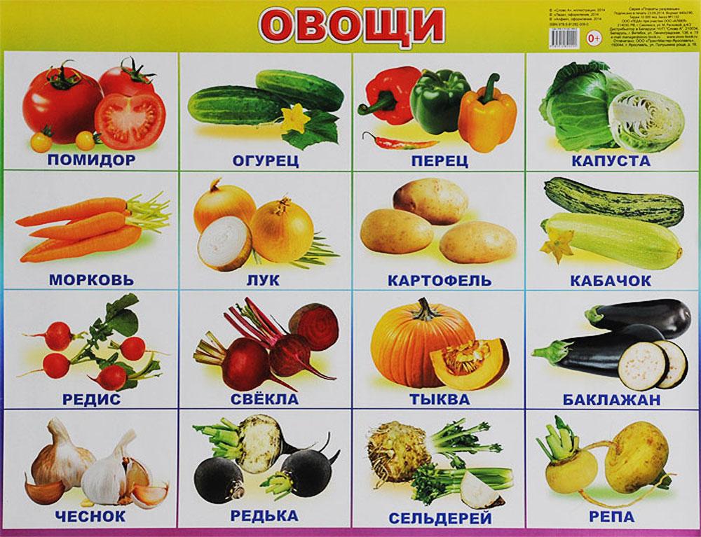 Алфея Обучающий плакат Овощи обучающие плакаты алфея плакат мебель