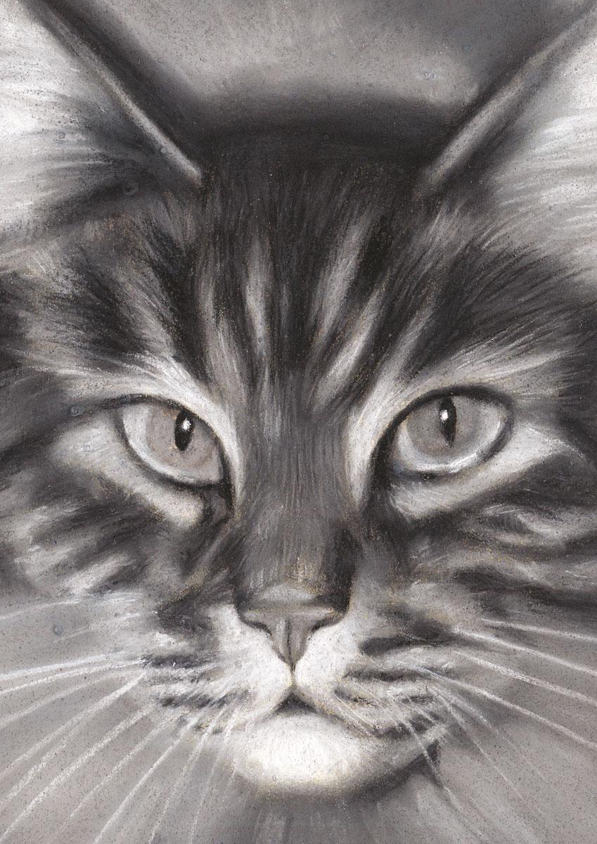 Попурри Записная книжка Кошка 80 листов в клетку/линейку 00422 феникс записная книжка ноутбук зонтик 80 листов