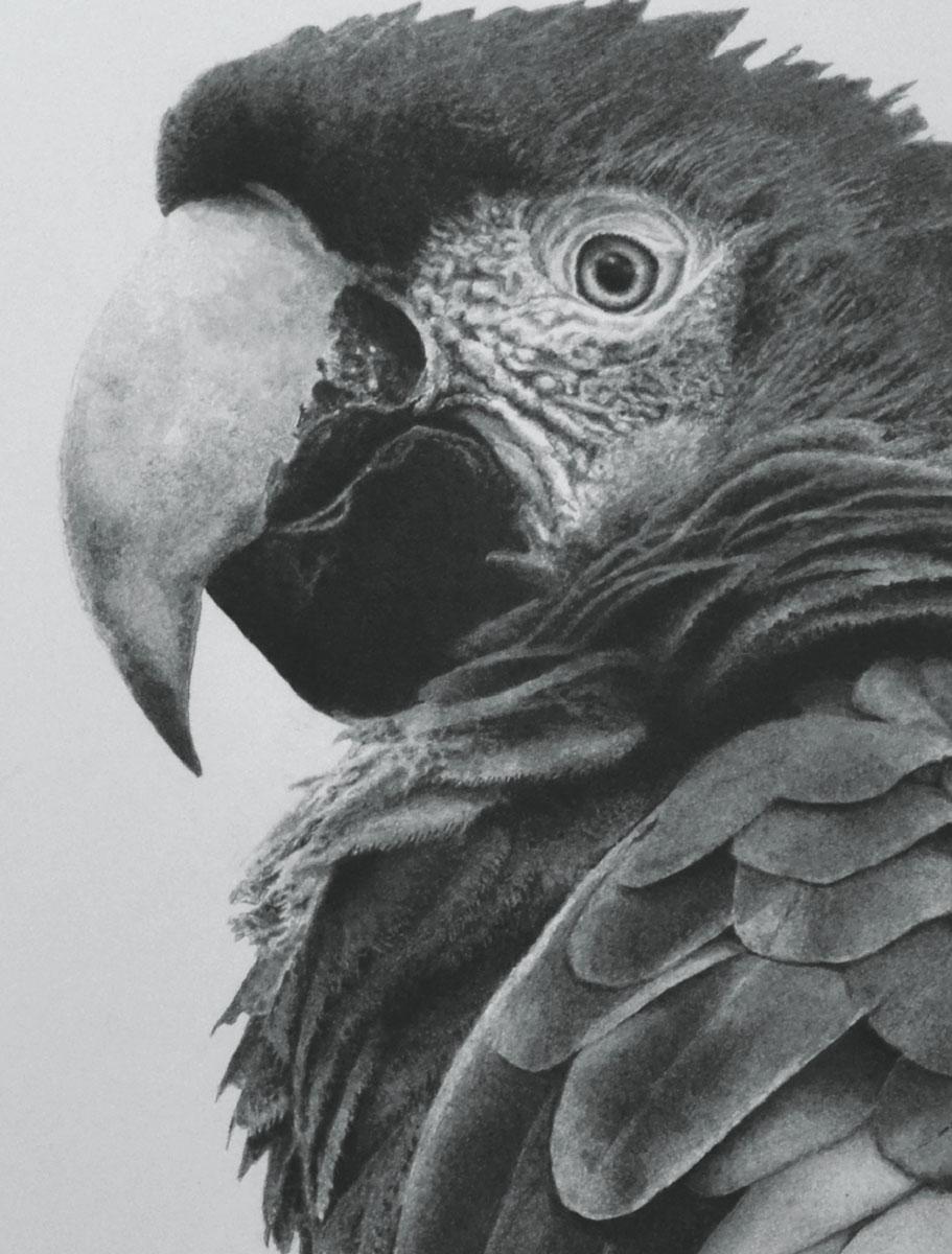 записная книжка 80 листов орнамент 1 18556 Попурри Записная книжка Попугай 80 листов в клетку/линейку