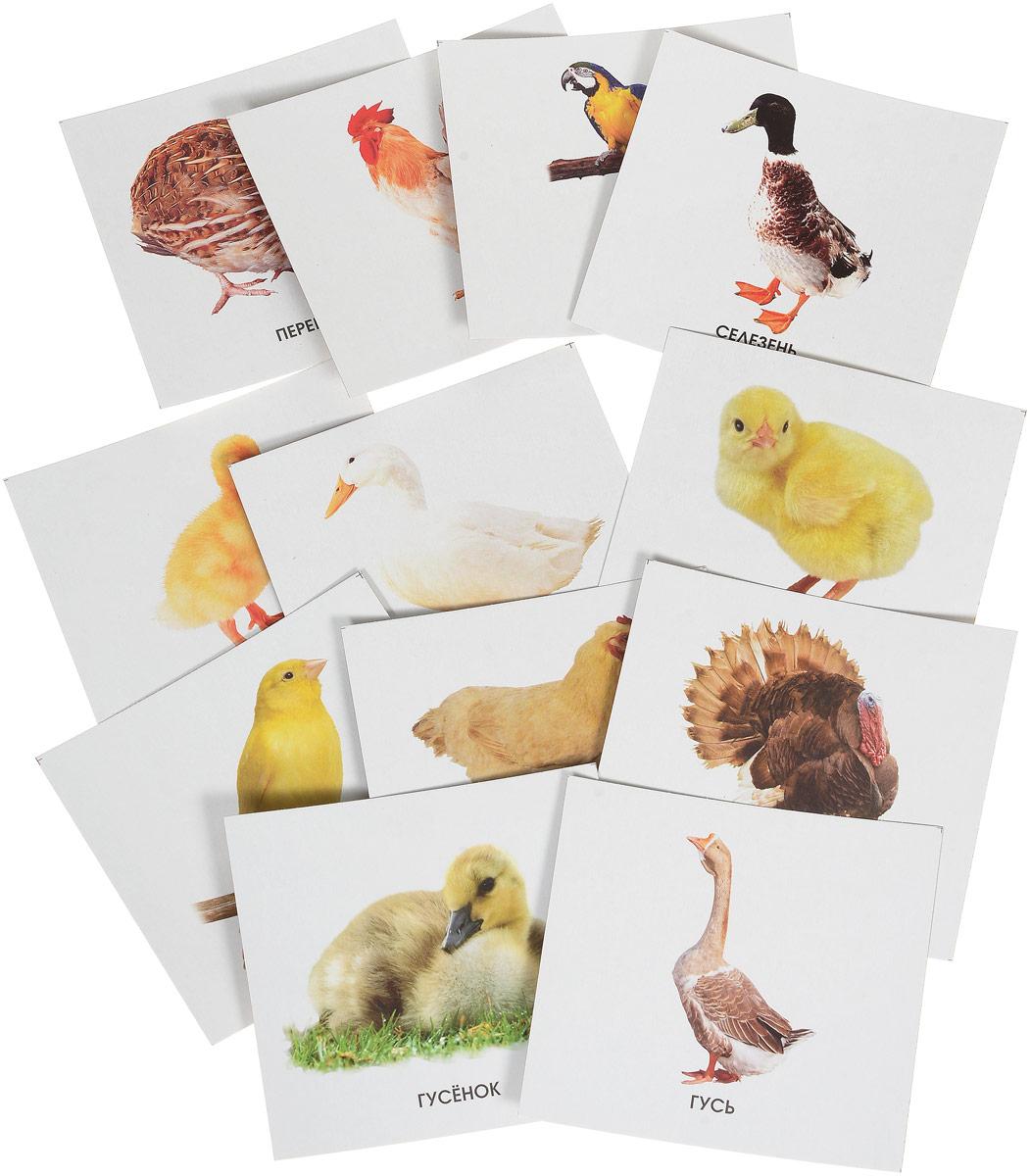 Улыбка Обучающие карточки Домашние птицы webmoney карточки в туле