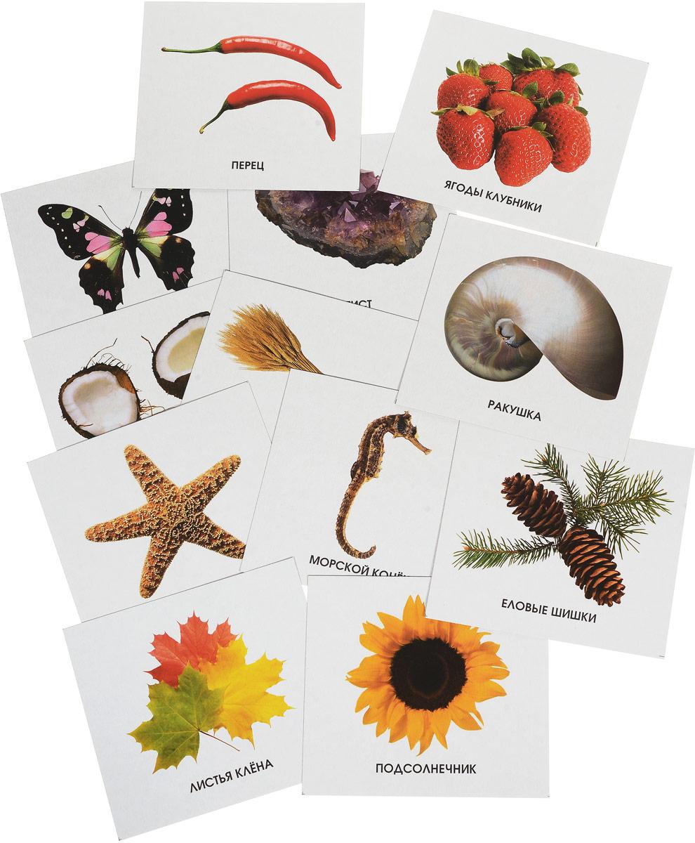 Улыбка Обучающие карточки Изучаем природу улыбка обучающие карточки игрушки