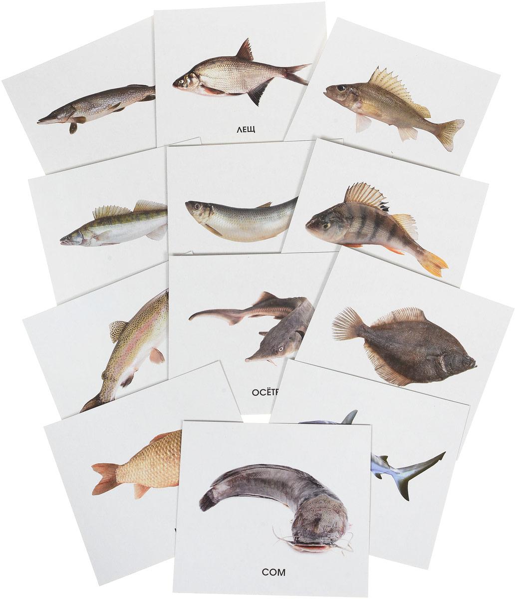 Улыбка Обучающие карточки Рыбы России webmoney карточки в туле