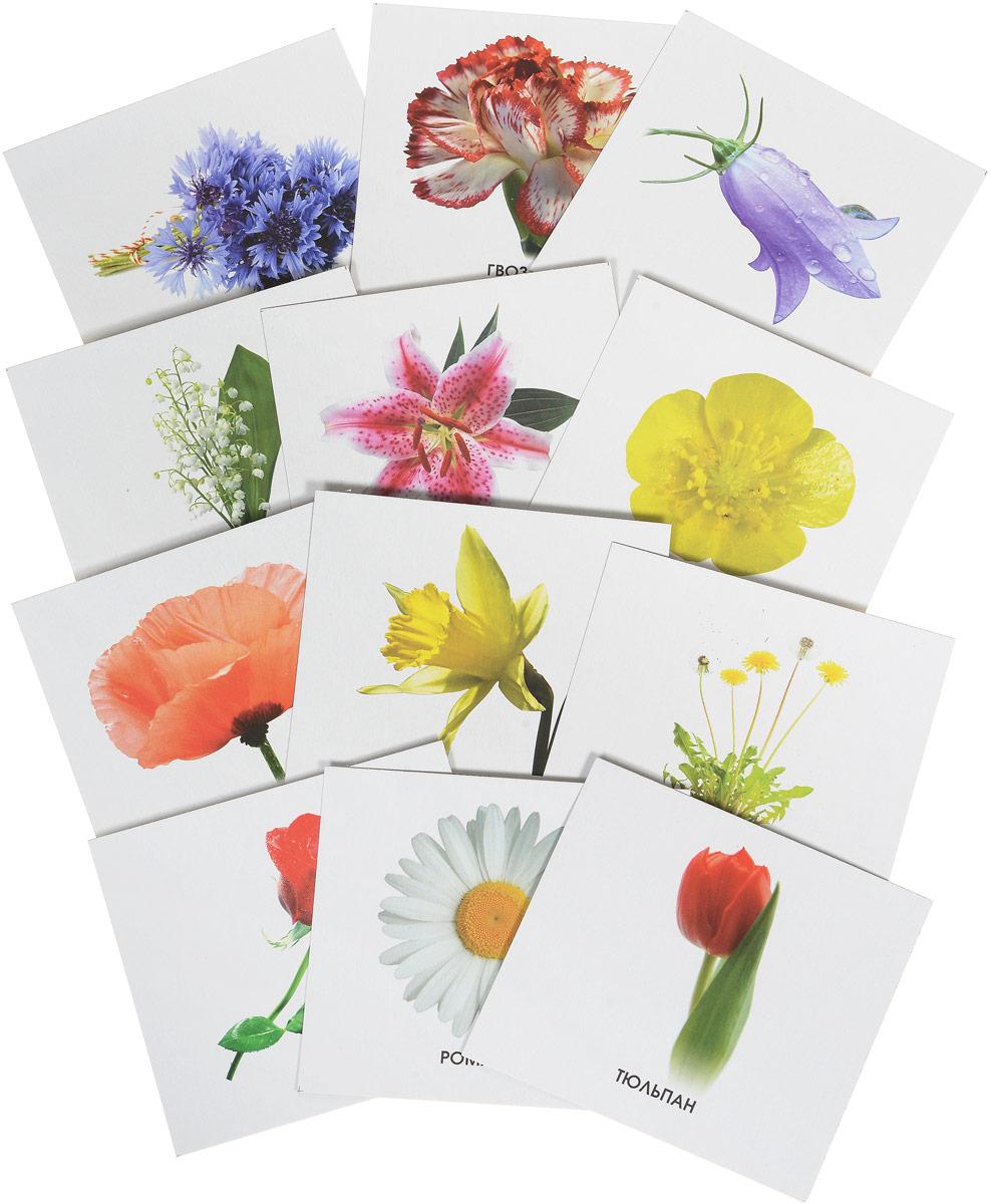 Улыбка Обучающие карточки Изучаем цветы webmoney карточки в туле