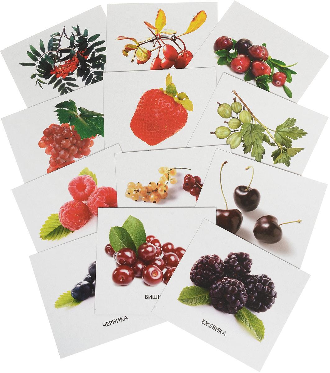 Улыбка Обучающие карточки Ягоды рыжий кот обучающие карточки грибы и ягоды