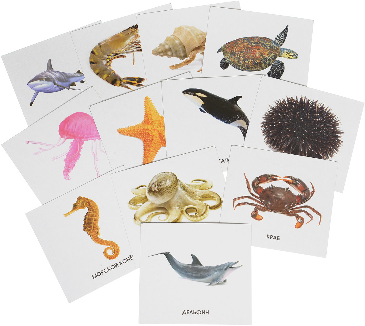 Улыбка Обучающие карточки Морские обитатели улыбка обучающие карточки игрушки