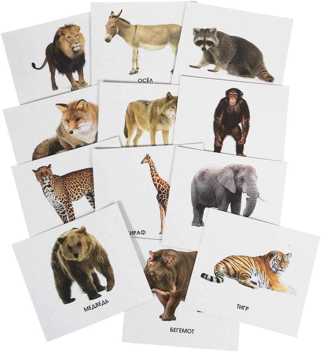 Улыбка Обучающие карточки Кто живет в зоопарке улыбка обучающие карточки игрушки