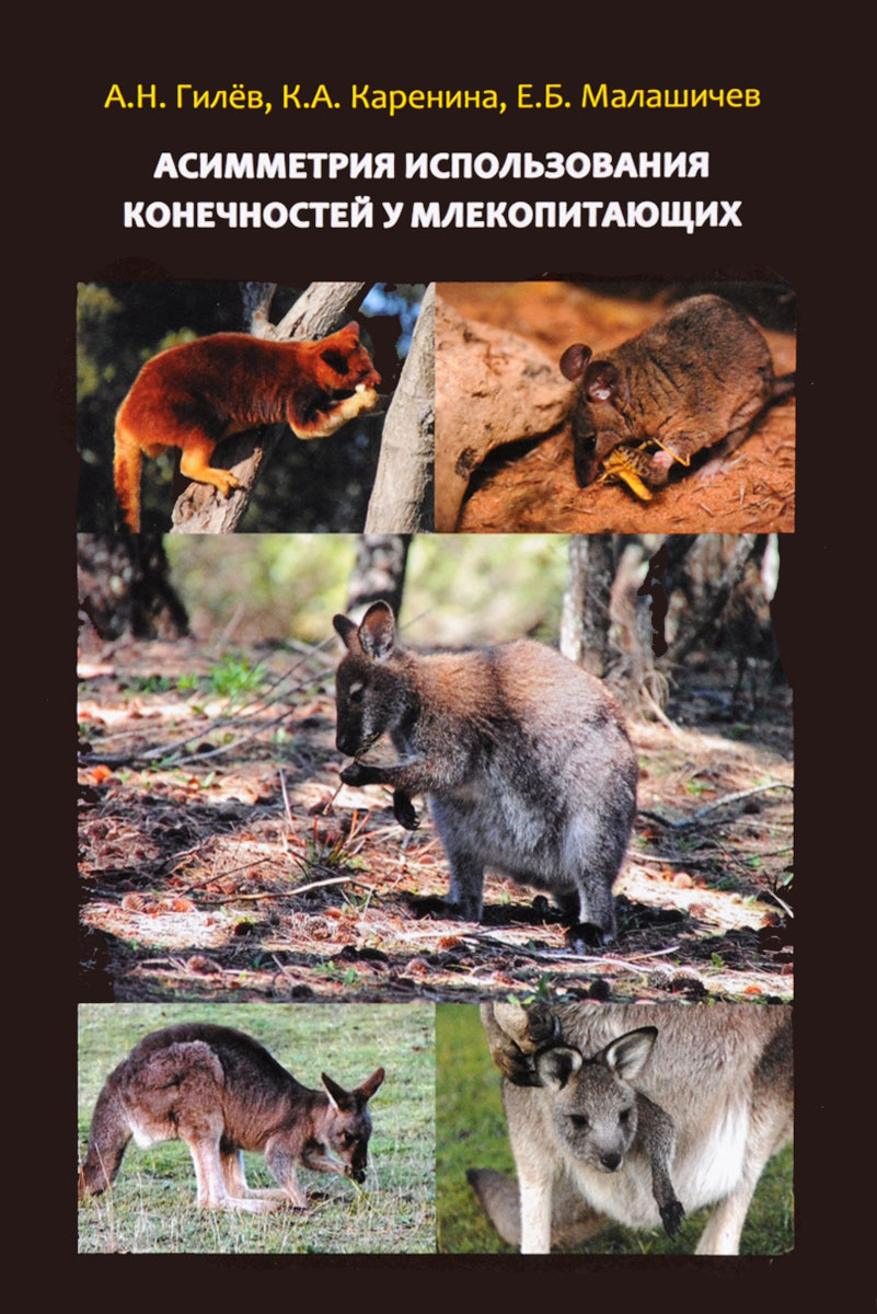 А. Н. Гилёв, К. А. Каренина, Е. Б. Малашичев Асимметрия использования конечностей у млекопитающих а н гилёв асимметрия использования конечностей у млекопитающих