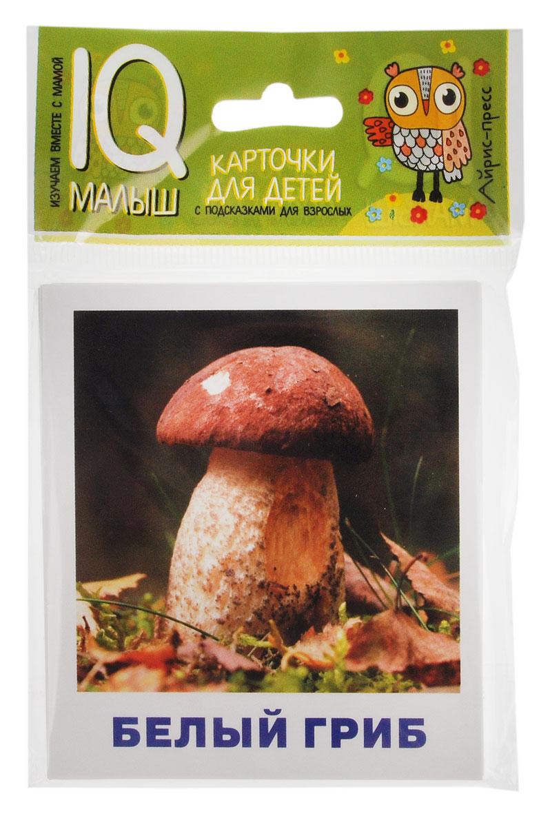 Айрис-пресс Обучающие карточки Грибное лукошко галлюциногенные грибы где купить