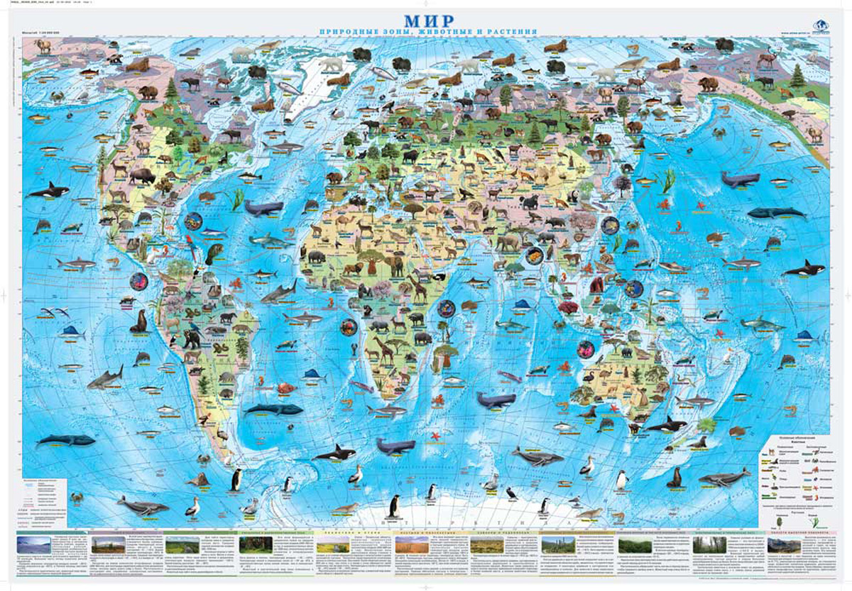 Мир. Природные зоны. Животные и растения. Настенная карта