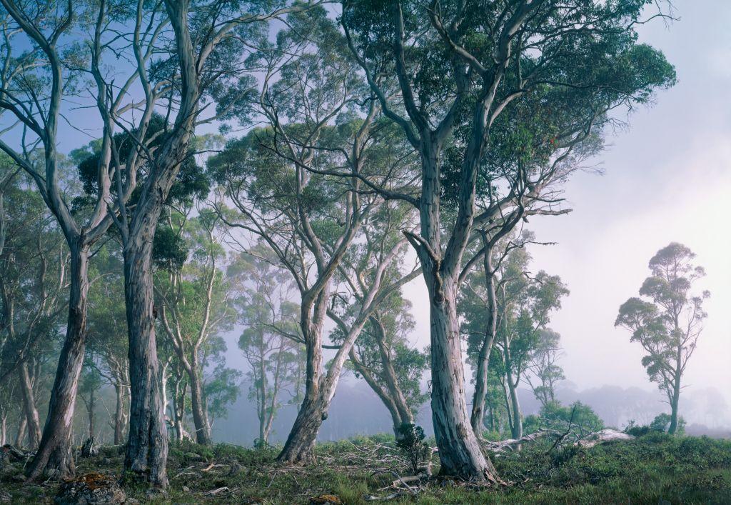 Фотообои Komar Фантастический лес, 3,68 х 2,54 м8-523Бумажные фотообои известного бренда Komar с панорамным видом позволят создать неповторимый облик помещения, в котором они размещены. Фотообои наносятся на стены тем же способом, что и обычные обои. Благодаря превосходной печати и высококачественной основе такие обои будут радовать вас долгое время. Фотообои снова вошли в нашу жизнь, став модным направлением декорирования интерьера. Выбрав правильную фактуру и сюжет изображения можно добиться невероятного эффекта живого присутствия.Ширина рулона: 3,68 м.Высота полотна: 2,54 м. Клей в комплекте.