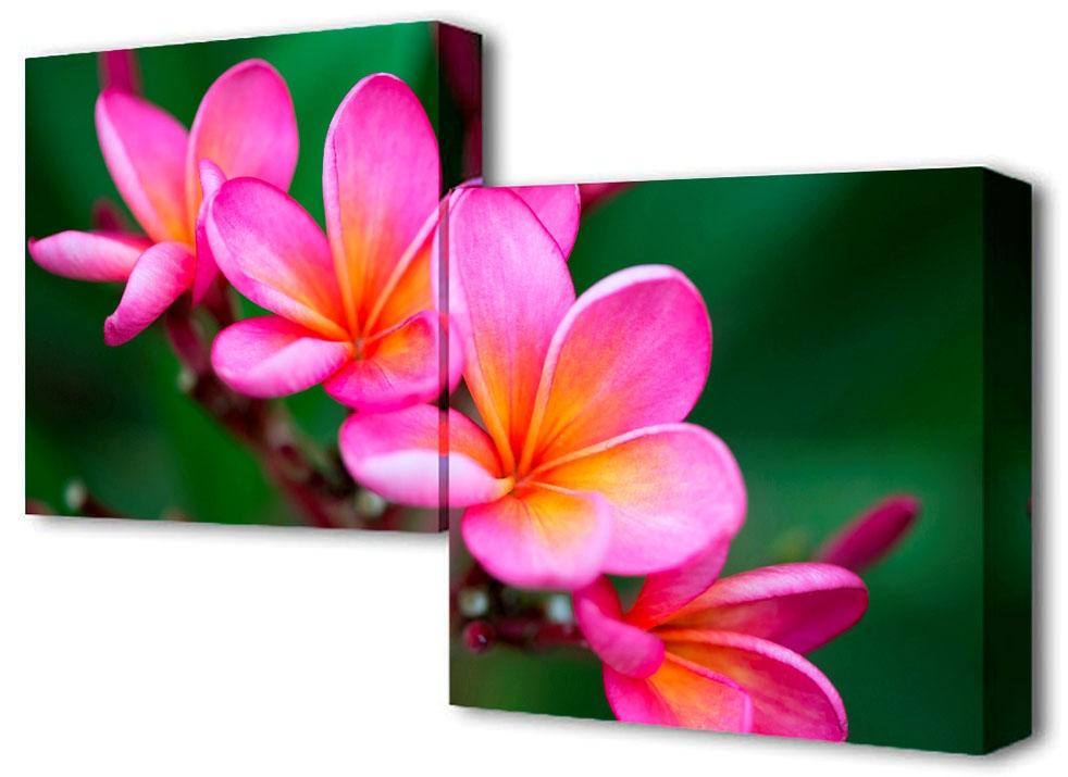 Картина модульная Toplight Цветы, 100 х 50 см. TL-M2010TL-M2010Модульная картина Toplight Цветы выполнена из синтетического полотна, подрамник из МДФ.Картина состоит из двух частей и выглядит очень аккуратно и эстетично благодаря такому способу оформления как галерейная натяжка. Подрамник исключает провисание полотна.Современные технологии, уникальное оборудование и цифровая печать, используемые в производстве, делают постер устойчивым к выцветанию и обеспечивают исключительное качество произведений.Благодаря наличию необходимых креплений в комплекте установка не займет много времени. Модульная картина - это прекрасная возможность создать яркий акцент при оформлении любого помещения. Изделие обязательно привлечет внимание и подарит немало приятных впечатлений своим обладателям. Правила ухода: можно протирать сухой, мягкой тканью. Рекомендованное расстояние между сегментами: 2 см.Толщина подрамника: 3 см.