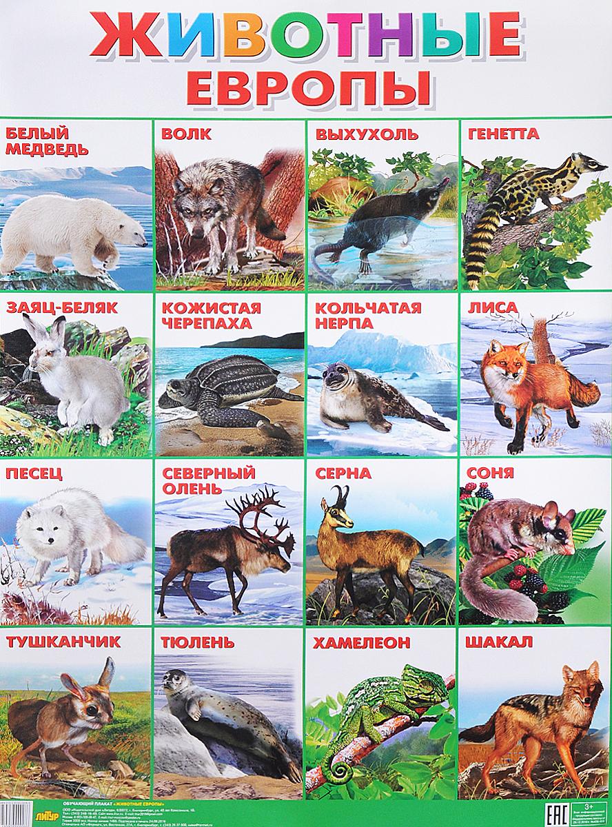 Животные Европы. Плакат