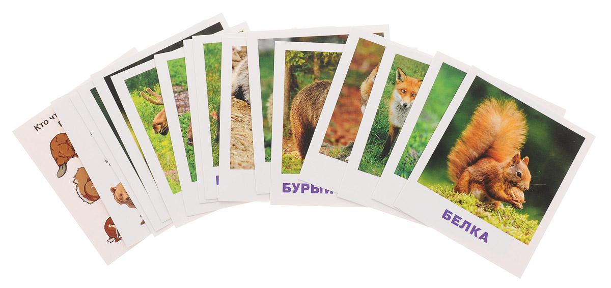 Айрис-пресс Обучающие карточки Кто живет в лесу? набор для игры карточная айрис пресс iq карточки развиваем мышление 25624