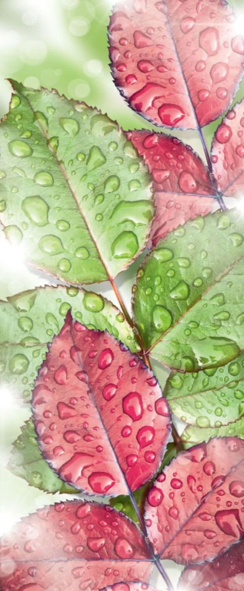 Панно декоративное Твоя Планета Свежесть листвы, 105 х 254 см панно декоративное твоя планета кино 210 х 147 см