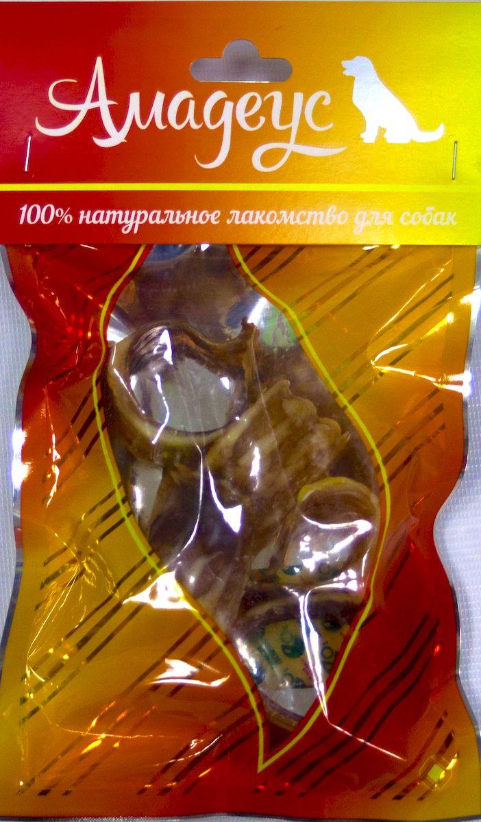 Лакомство для собак Амадеус Трахея большая колечками говяжья, 5 шт58540Лакомство для собак Амадеус Трахея большая колечками говяжья - 100% натуральный продукт почти без запаха, а также без содержания химических добавок. При сушке не использовались отбеливатели и консерванты. Лакомство изготавливается из тщательно отобранного и проверенного высококачественного отечественного сырья. Содержит низкокалорийный, легкоусвояемый, гипоаллергенный белок. Продукт богат витаминами и ферментами микрофлоры желудка жвачных животных.В упаковке 5 колечек трахеи.Рекомендовано для профилактики витаминного и ферментного дефицита у собак и кошек всех пород и возрастов. Товар сертифицирован.