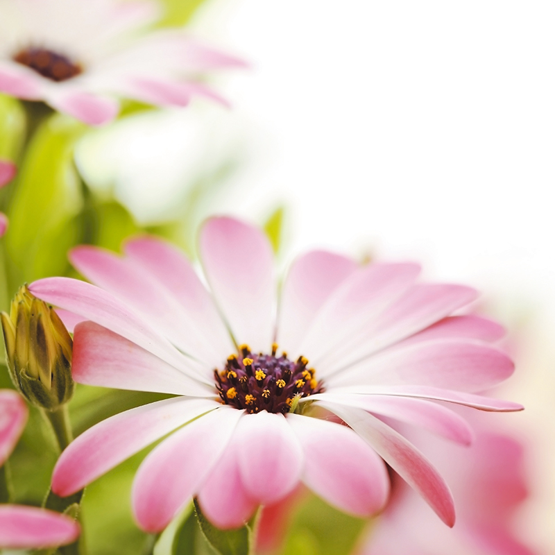 "Картина Postermarket ""Розовые цветы"", 30 х 30 см"
