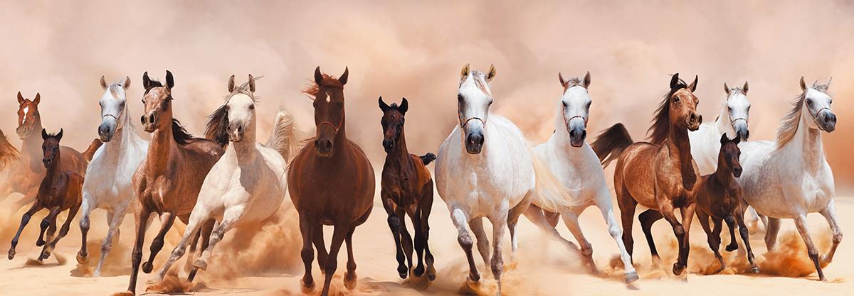 """Картина Postermarket """"Табун лошадей"""" прекрасно подойдет для декора интерьера различных помещений. Постер представляет собой изображение лошадей, выполненное в технике фотопечать.  Картина для интерьера (постер) - это современное и актуальное направление в дизайне помещений. Ее можно использовать для оформления любых помещений (дом, квартира, офис, бар, кафе, ресторан или гостиница).  работоспособность.  Правильное оформление интерьера создает благоприятный психологический климат, улучшает настроение и мотивирует. Размер картины: 300 x 950 мм."""