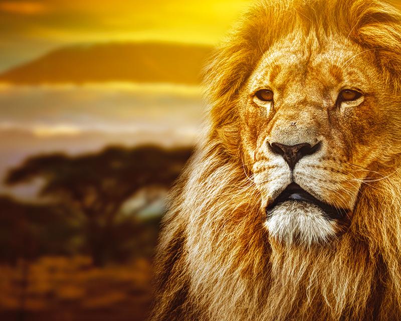 Картина Postermarket Царь зверей, 40 х 50 см. AG 40-48 картина на холсте decoretto art царь зверей 60 х 30 см