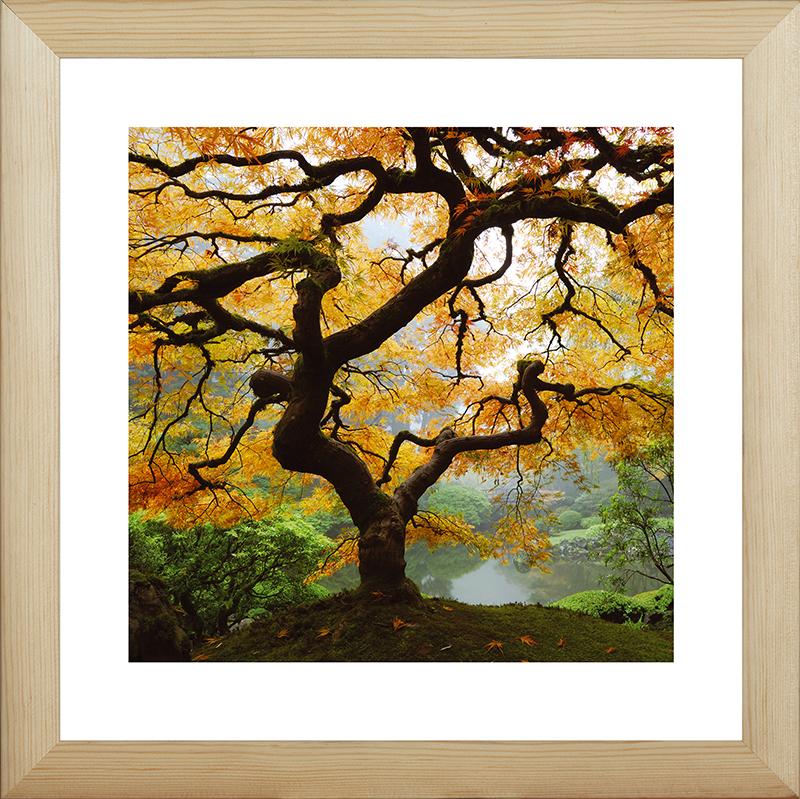Картина Postermarket Осенний клен, 40 х 40 см картины в квартиру картина sunrise 35х77 см
