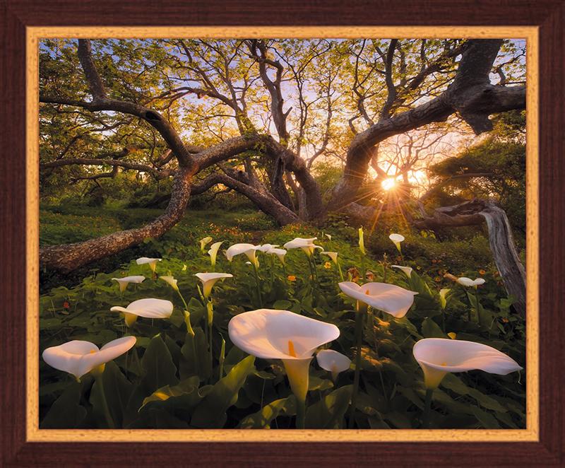 Картина Postermarket Рай на Земле, 40 х 50 смPM-4019Картина Postermarket Рай на Земле прекрасно подойдет для декора интерьера различных помещений.Постер, выполненный в технике фотопечать, оформлен багетом коричневого цвета.Картина для интерьера (постер) - это современное и актуальное направление в дизайне помещений. Ее можно использовать для оформления любых помещений (дом, квартира, офис, бар, кафе, ресторан или гостиница).работоспособность.Правильное оформление интерьера создает благоприятный психологический климат, улучшает настроение и мотивирует. Размер картины: 400 x 500 мм.