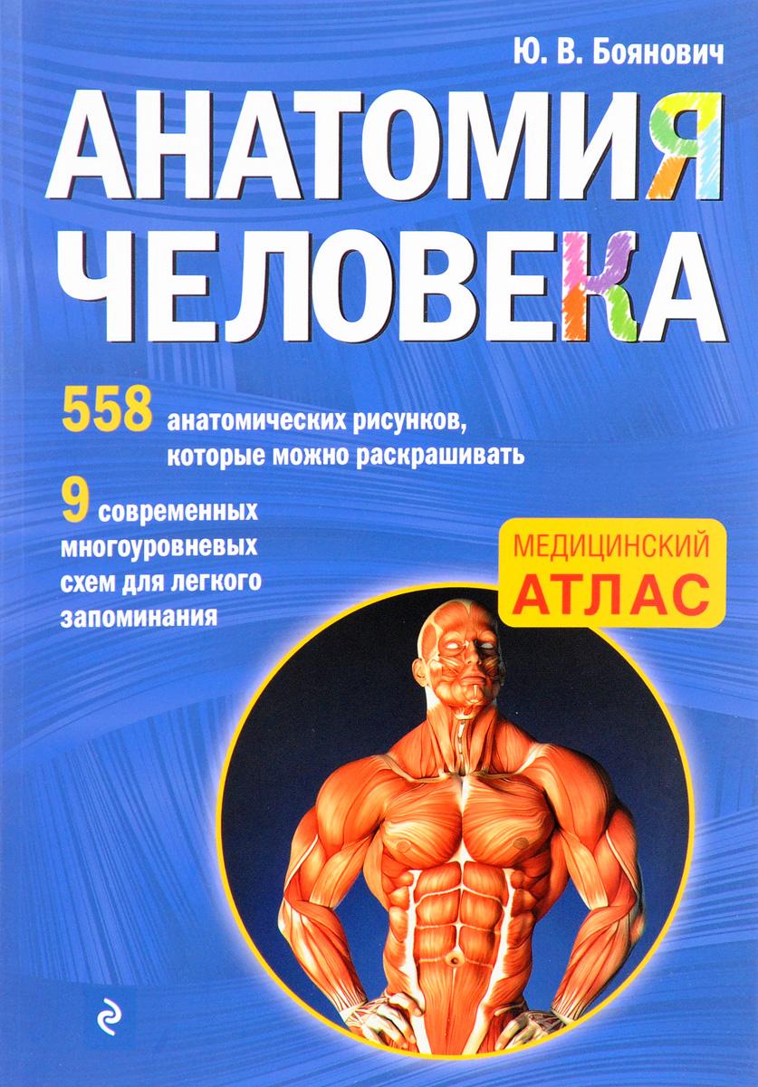 Ю. В. Боянович Анатомия человека. Медицинский атлас ю в боянович анатомия человека компактный атлас раскраска