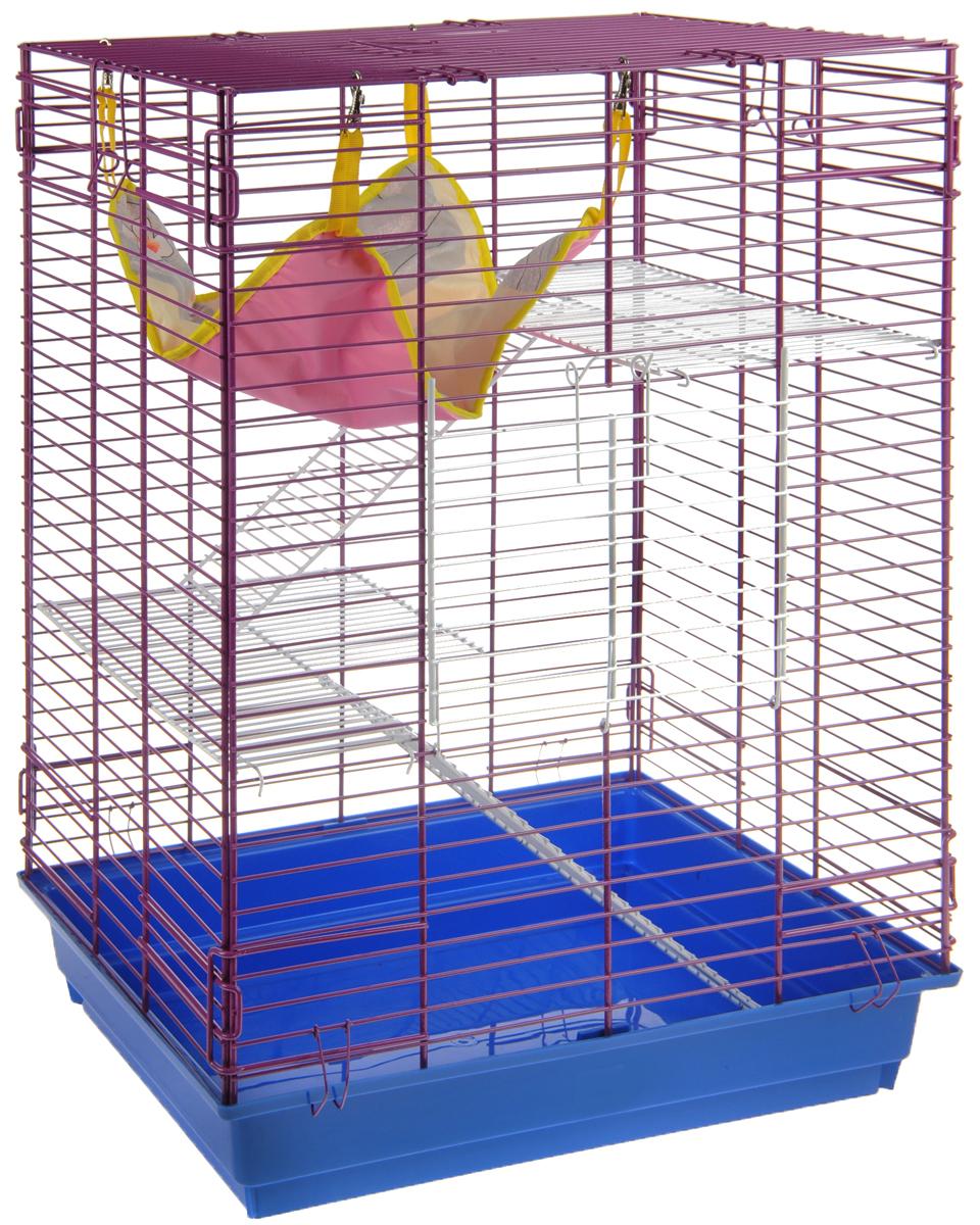 Клетка для шиншилл и хорьков ЗооМарк, цвет: синий поддон, ярко-фиолетовая решетка, 59 х 41 х 79 см. 725жк725жкСФКлетка ЗооМарк, выполненная из полипропилена и металла, подходит для шиншилл и хорьков. Большая клетка оборудована длинными лестницами и гамаком. Изделие имеет яркий поддон, удобно в использовании и легко чистится. Сверху имеется ручка для переноски. Такая клетка станет уединенным личным пространством и уютным домиком для грызуна.