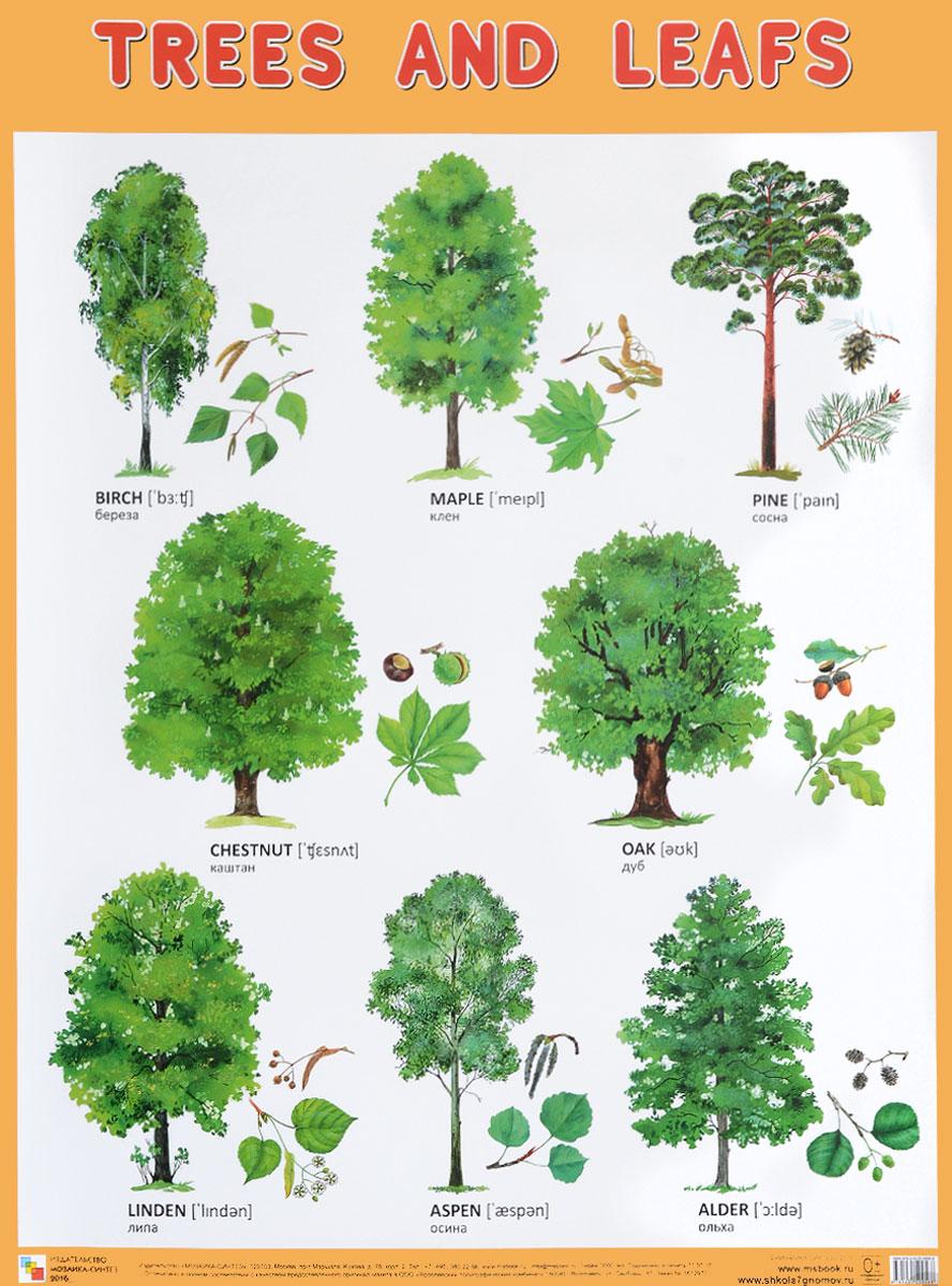 Trees and Leafs / Деревья и листья. Плакат