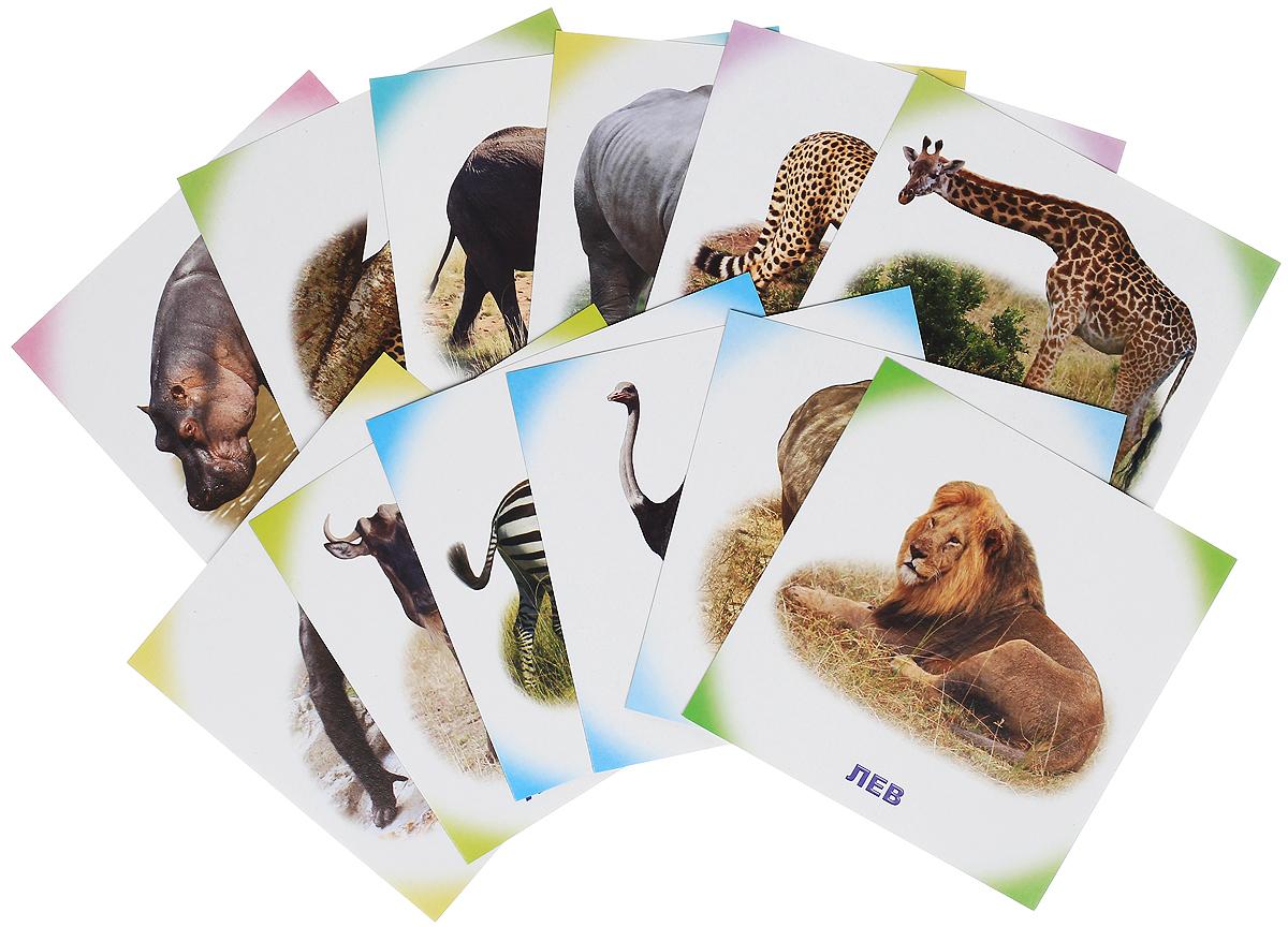 Обучающие карточки. Животные Африки улыбка обучающие карточки игрушки