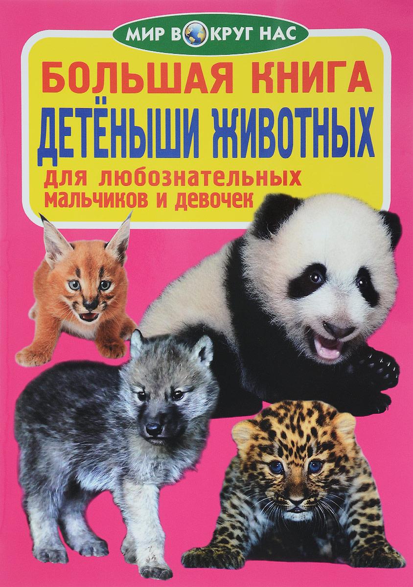 О. В. Завязкин Детёныши животных