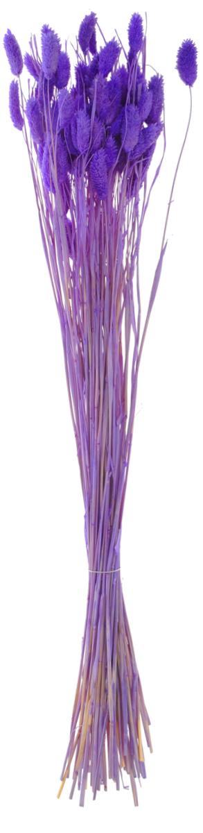 Украшение декоративное Lovemark Пучок. Фалярис, длина 77 см6009Каждое время года по-своему прекрасно. Однако как часто поздней осенью и долгой зимой нам не хватает тепла, ярких весенних красок, которые дарят цветы. Этот недостаток можно восполнить благодаря композициям из сухоцветов.Букет из сухих цветов способен сохранять свою красоту на протяжении всего года, а уход за ним минимален. Очень удобны сухоцветы и для использования их людьми с повышенной аллергической реакцией на пыльцу растений и различные резкие запахи. Подчеркните свой неповторимый вкус в интерьере с помощью нежной композиции из сухих цветов.