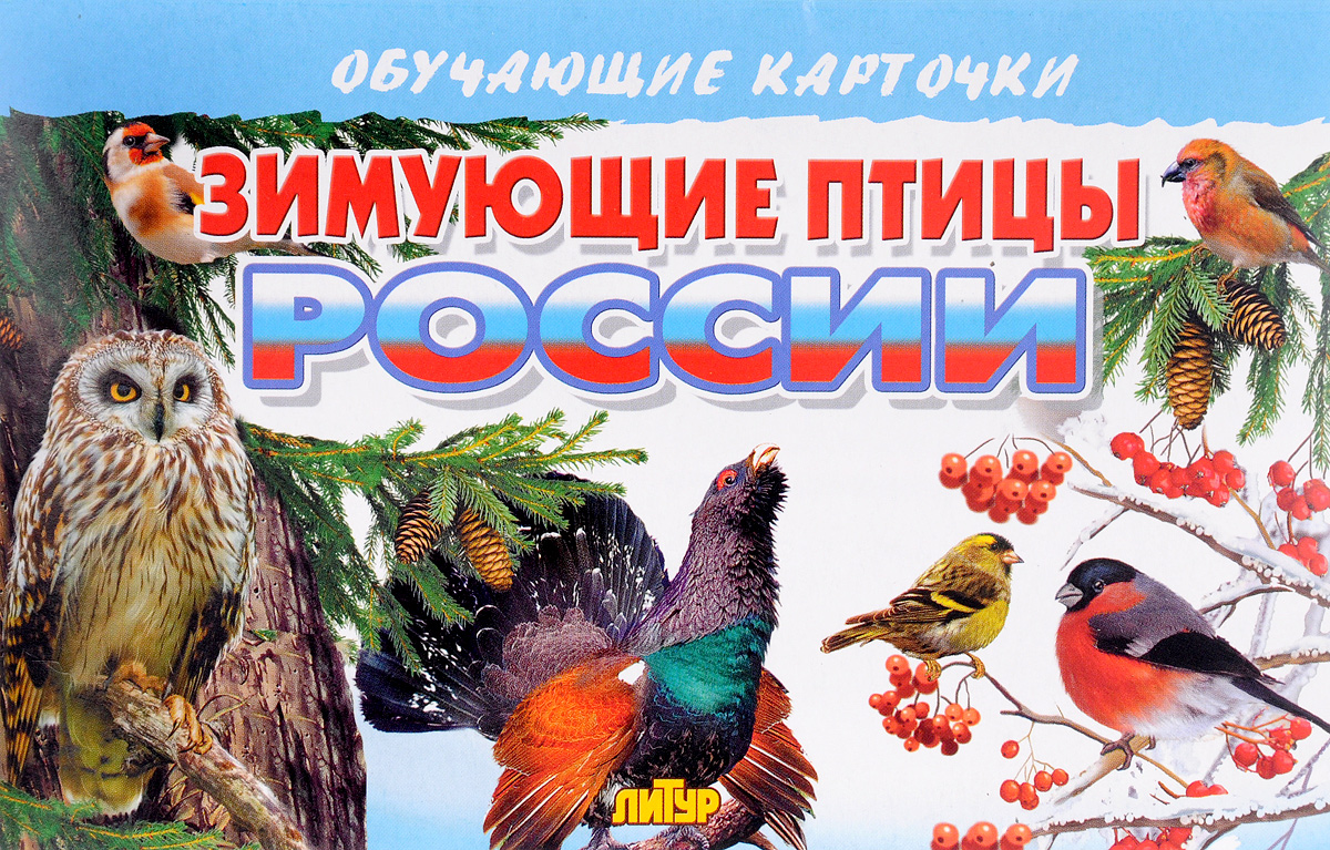 Зимующие птицы России. Обучающие карточки