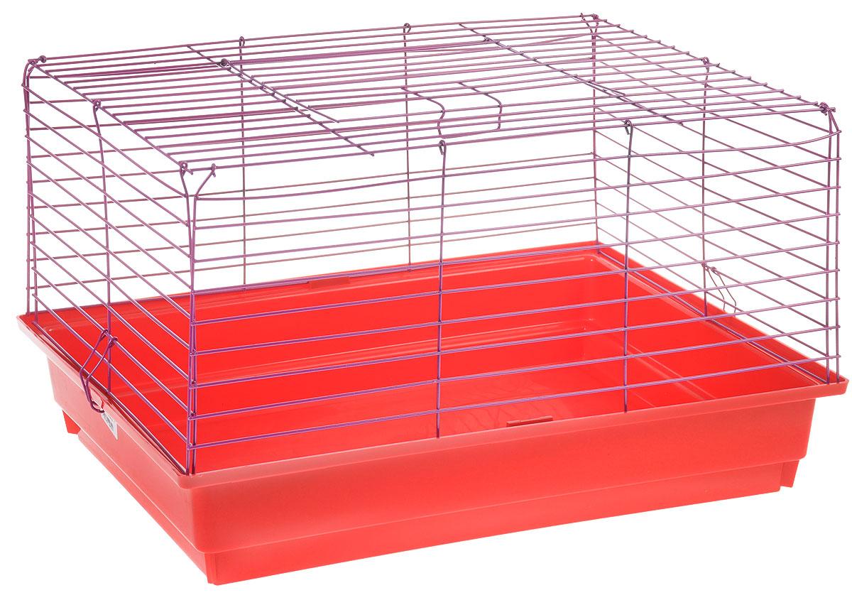 Клетка для кролика  ЗооМарк , цвет: красный поддон, фиолетовая решетка, 50 х 35 х 30 см - Клетки, вольеры, будки