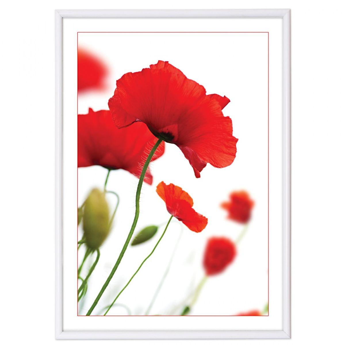 Фоторамка Pioneer Poster White, цвет: белый, 15 х 21 см7907 PRРамка для фото формата 15х21 см.Материал: пластик.Материалы, использованные в изготовлении рамок, обеспечивают высокое качество хранения Ваших фотографий, поэтому фотографии не желтеют со временем.