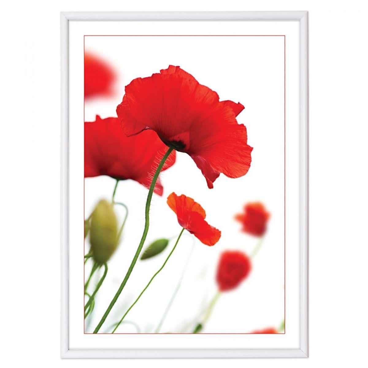 Фоторамка Pioneer Poster Lux White, цвет: белый, 21 х 29,7 см15796 PRФоторамка Pioneer Poster Lux White выполнена из пластика и стекла, защищающего фотографию. Оборотная сторона рамки оснащена специальным крючком, благодаря которому ее можно повесить на стену. Такая фоторамка поможет вам оригинально и стильно дополнить интерьер помещения, а также позволит сохранить память о дорогих вам людях и интересных событиях вашей жизни.Размер фотографии: 21 см х 29,7 см.