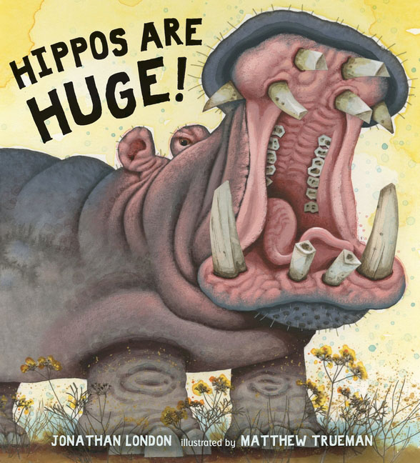 Hippos Are Huge! seeing things as they are