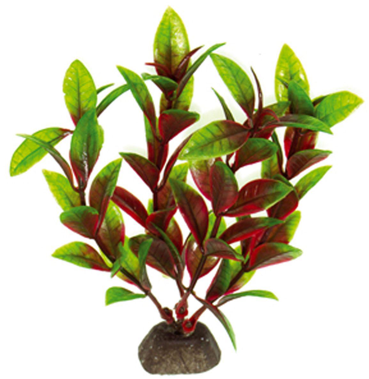 Искусственное растение для аквариума Dezzie, 10 см. 56020145602014Подводное искусственное растение для аквариума Dezzie является неотъемлемой частью композиции аквариума, радует глаз, а также может быть уютным убежищем для рыб и других обитателей аквариума. Пластиковое растение имеет устойчивое дно, которое не нуждается в дополнительном утяжелении и легко устанавливается в грунт. Растение очень практично в использовании, имеет стойкую к воздействию воды окраску и не требует обременительного ухода. Его можно легко достать и протереть тряпкой во время уборки аквариума. Растения из пластика создадут неповторимый дизайн пресноводного или морского аквариума.Высота растения: 10 см.
