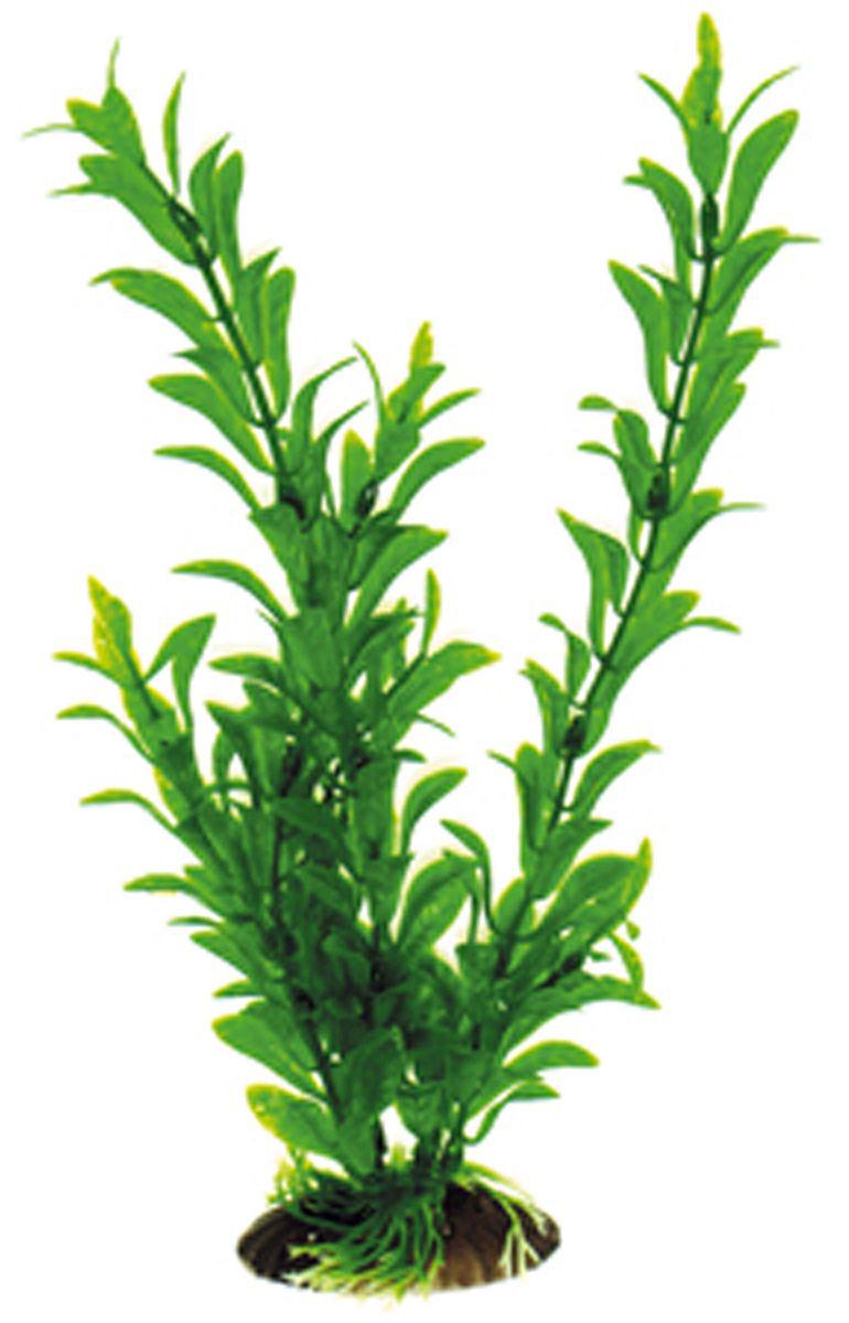 Искусственное растение для аквариума Dezzie, 30 см. 56020435602043Подводное искусственное растение для аквариума Dezzie является неотъемлемой частью композиции аквариума, радует глаз, а также может быть уютным убежищем для рыб и других обитателей аквариума. Пластиковое растение имеет устойчивое дно, которое не нуждается в дополнительном утяжелении и легко устанавливается в грунт. Растение очень практично в использовании, имеет стойкую к воздействию воды окраску и не требует обременительного ухода. Его можно легко достать и протереть тряпкой во время уборки аквариума. Растения из пластика создадут неповторимый дизайн пресноводного или морского аквариума.Высота растения: 30 см.