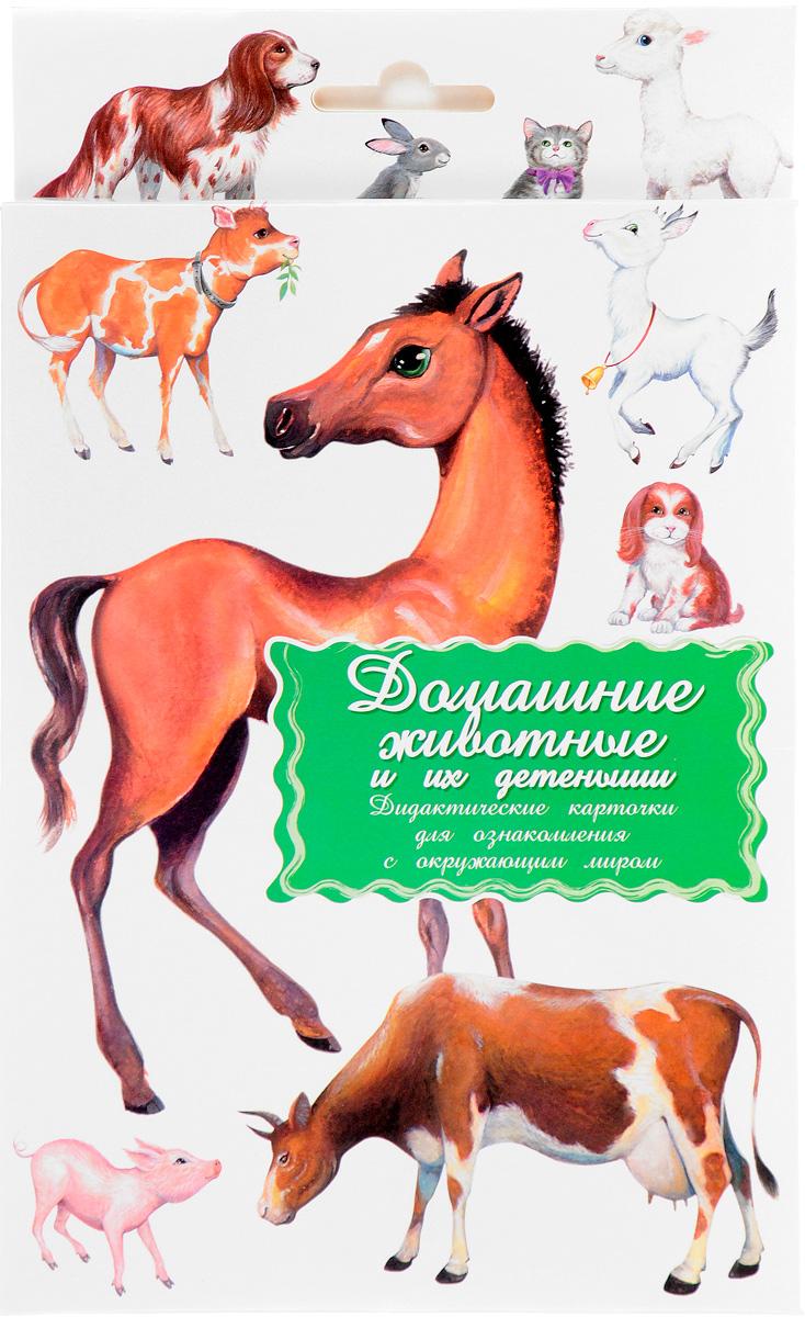 Домашние животные и их детеныши. Дидактические карточки мельник в домашние животные и их детеныши page 3