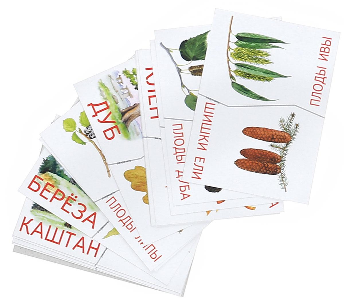 Деревья, плоды, листья. Разрезные карточки