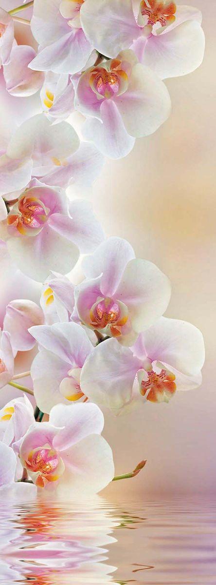 Фотообои Milan Светлая орхидея, текстурные, 100 х 270 см