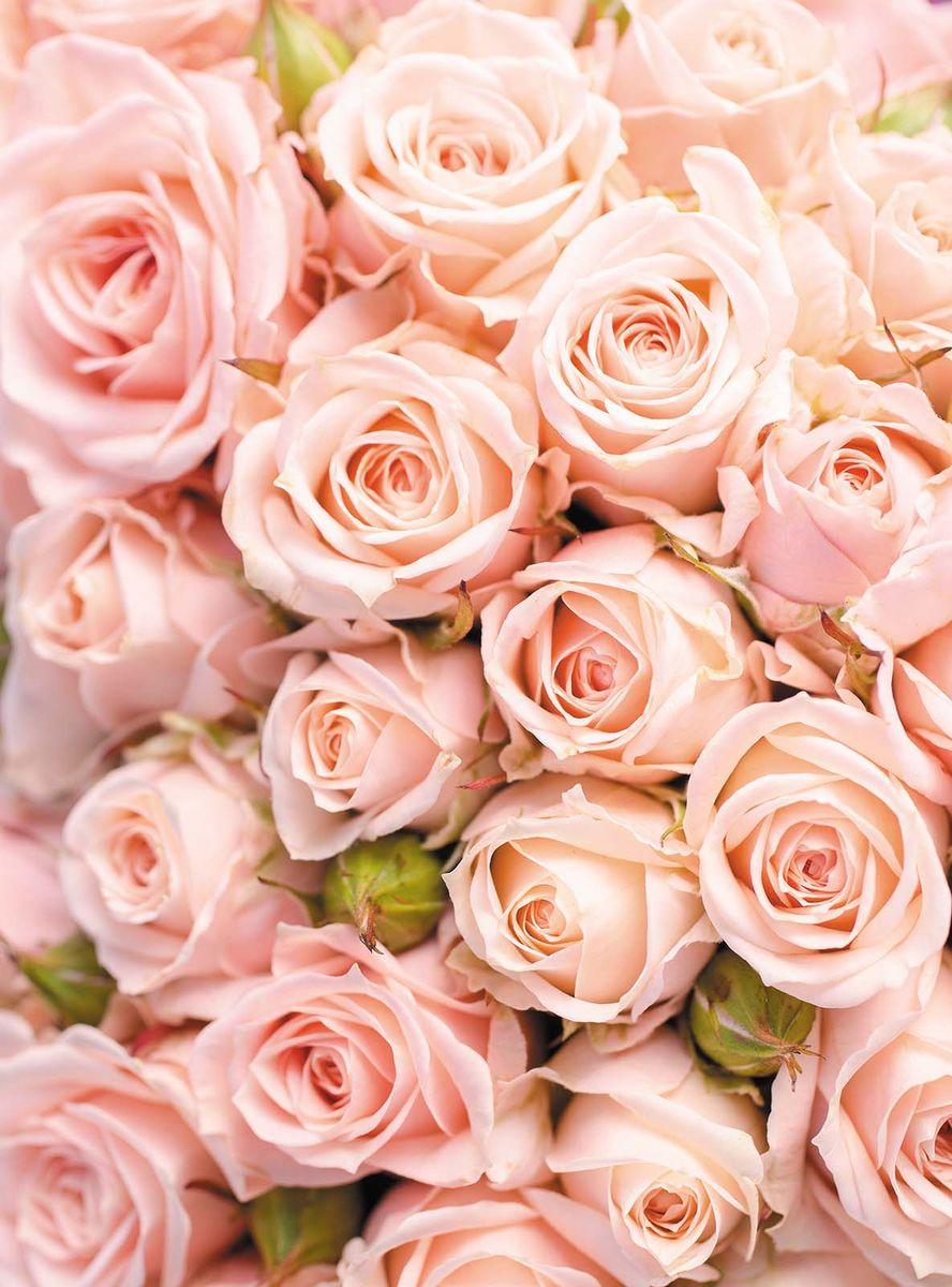 Фотообои Milan Розовое счастье, текстурные, 200 х 270 см