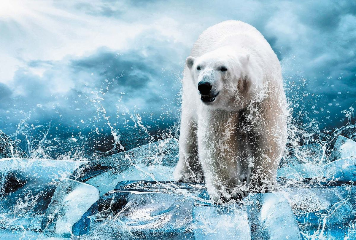 Фотообои Milan Медведь во льдах, текстурные, 400 х 270 см. M 406m 406Виниловые обои горячего тиснения на флизелиновой основе MILAN — дизайнерская коллекция фотообоев и фотопанно европейского качества, созданная на основе последних тенденций в мире интерьерной моды. Еще вчера эти тренды демонстрировались на подиумах