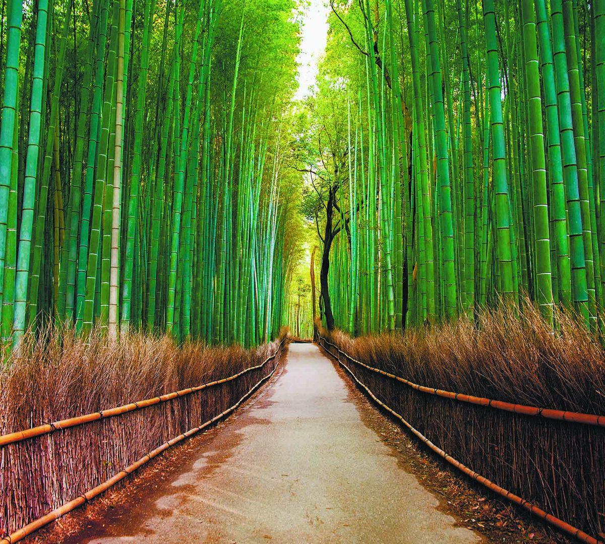 Фотообои Milan Бамбуковая роща, текстурные, 200 х 180 см. M 509 фотообои milan мостик у цветущей вишни текстурные 200 х 135 см m 629
