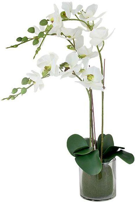 Декоративные цветы в вазе Dream Garden Орхидея белая, 30х20х44 смDG-16023N-ALТорговая марка Dream Garden, Китай. Композиции из искусственных цветов долговечны, не требуют ежедневного ухода, выполнены из натуральных шелка и текстиля, прошедших специальную обработку высококачественными современными материалами. Искусственные цветы максимально приближены к натуральным, не пахнут, что исключает все аллергические реакции.