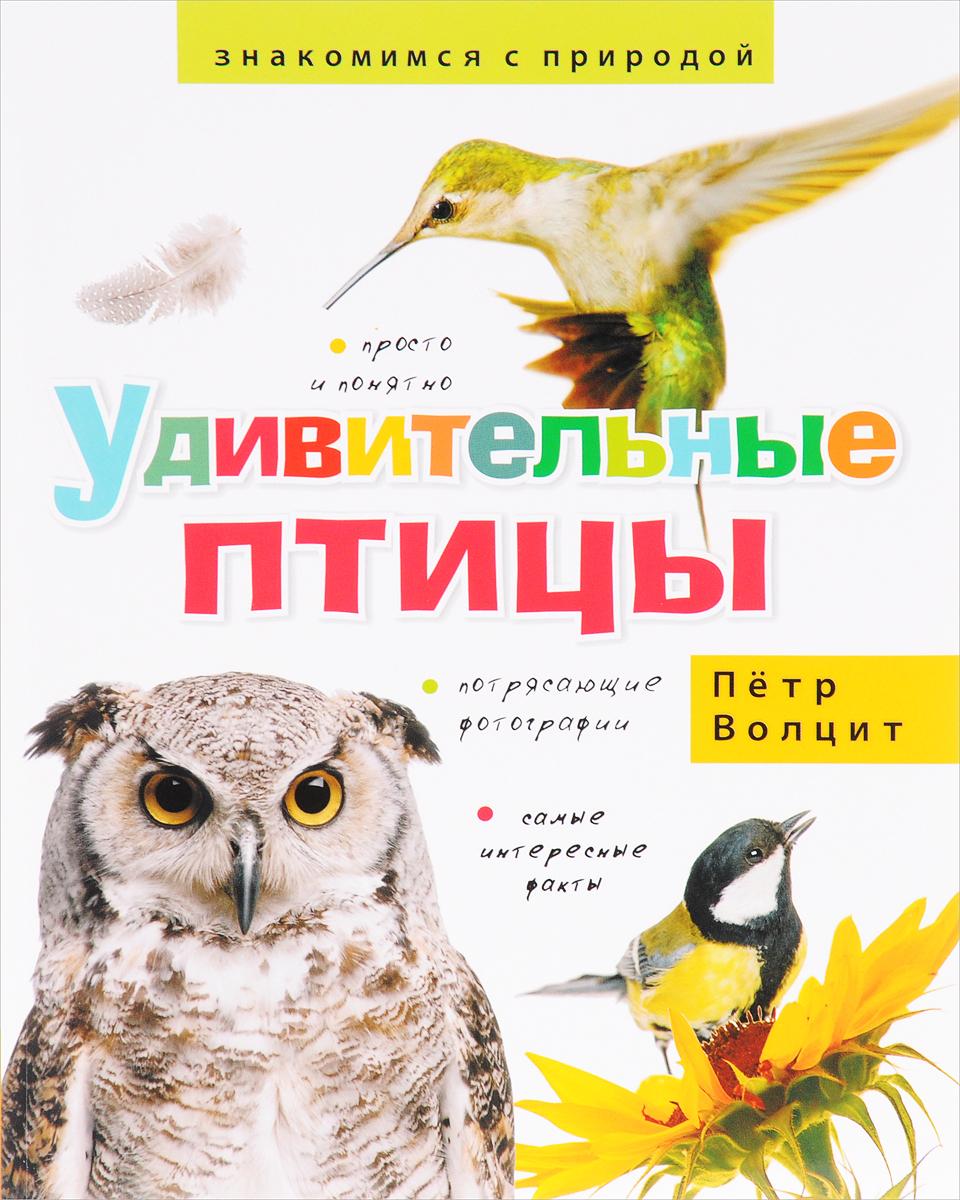 Пётр Волцит Удивительные птицы